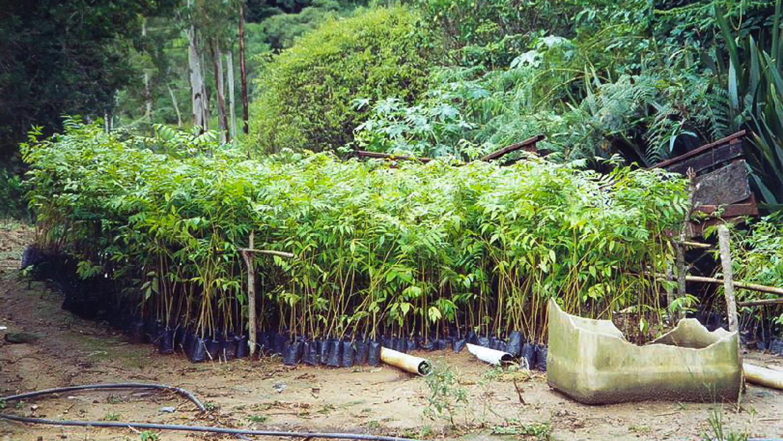 Reforestation at salve floresta